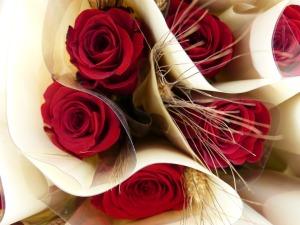 Red rose, Sant Jordi